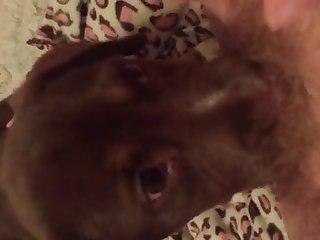 Pup Licks