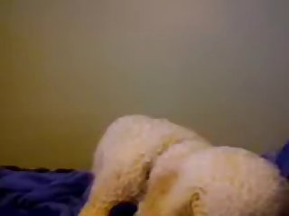 Two Dogs Lick On Webcam